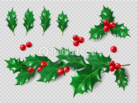 Christmas Leaves.Holly Set Realistic Leaves Branch Red Berries Christmas And