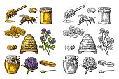 Honey set. Jars of honey, bee, hive, clover, spoon, cracker, bread and honeycomb. Vector vintage color and white engraved illustration. Isolated on dark background