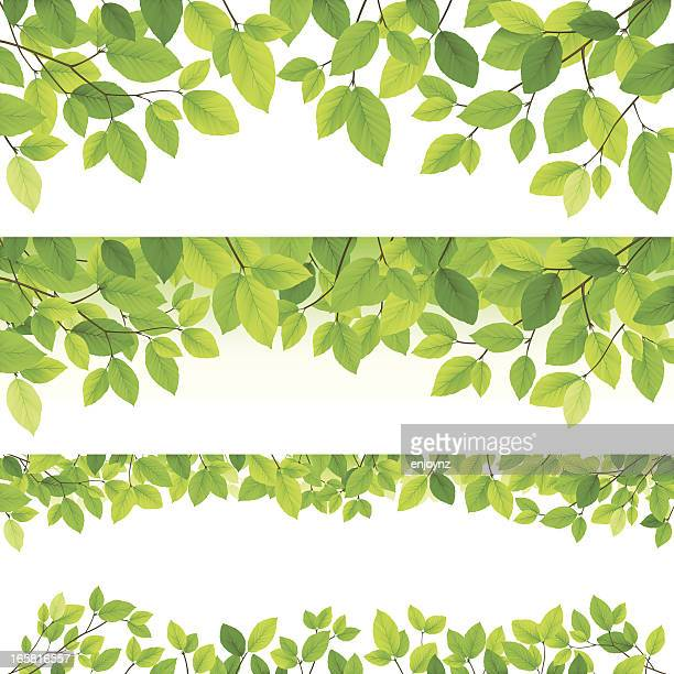 Horizontal leaf backgrounds