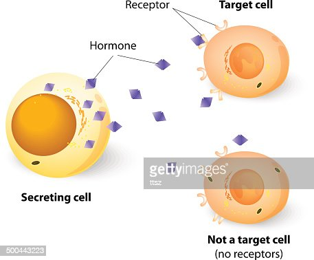 target cell