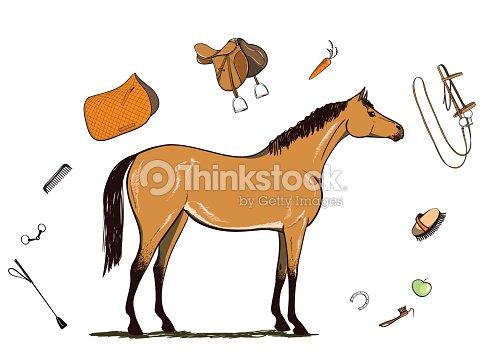 Quitation cheval et harnais bride selle trier brosse - Clipart cheval gratuit ...