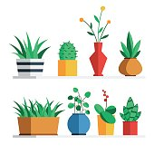 House plants and flowers in colored pots on the shelf for home or office interior decoration. Vector illustration flat style design set isolated on white background