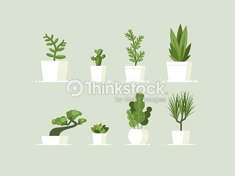 Houseplant in pots : stock vector