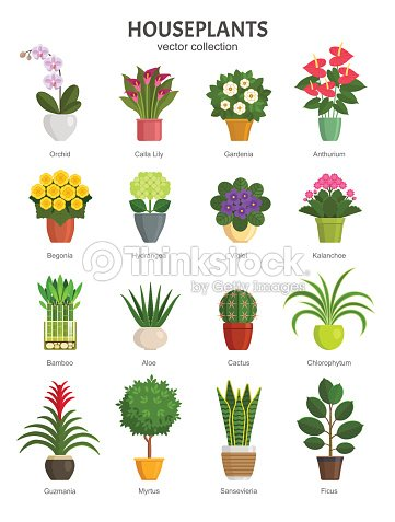 Houseplants collection. : stock vector