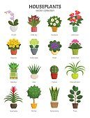 Vector illustration of most popular houseplants and flowers in multi-colored pots, such as Orchid, Calla Lily, Gardenia, Violet, Aloe and Cactus. Isolated on white.
