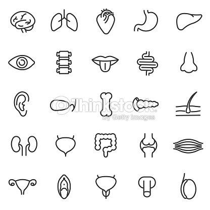 Menschliche Anatomie Symbole Festgelegt Inneren Organe Körperteile ...