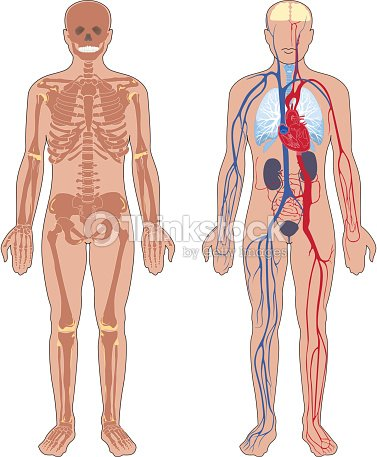 176745411 on blood circulatory system in hindi