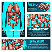Human anatomy medical banner set with organ sketch. Human body silhouette with heart, brain and lungs, liver, kidney and stomach, spine, intestine and ear, tooth and bones poster for medicine design