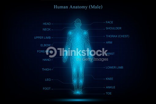Human Body Anatomy Glowing Blue In The Dark Background As Medical