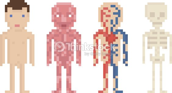 Human Body Anatomy Nude Body Muscle Blood Circle And Vector Art