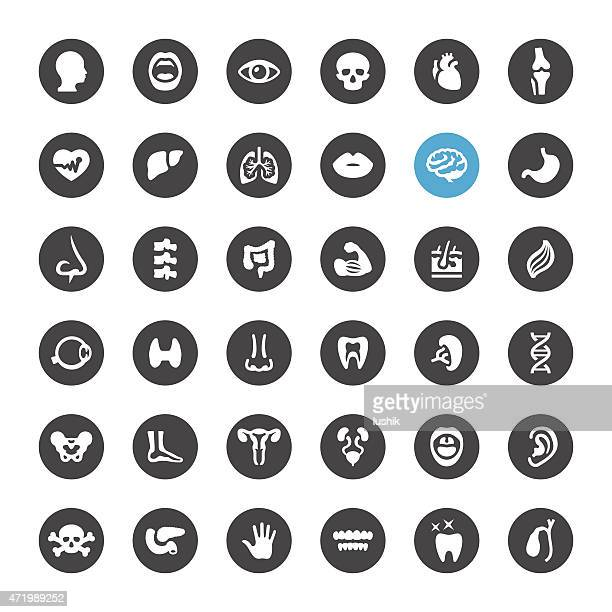 Human Body and Internal Organ vector icons