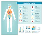 Human body health care infographics, with medical icons, organs, charts, diagrams and copy space