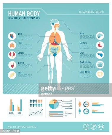 Human body infographics : stock vector