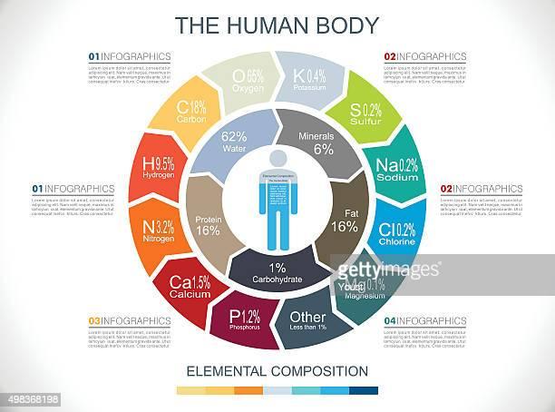 Human Body Infographics