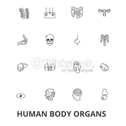 Human Body Organs Human Body Medical Human Anatomy Body System Body ...