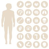 human body parts anatomy, vector medical organs icon,