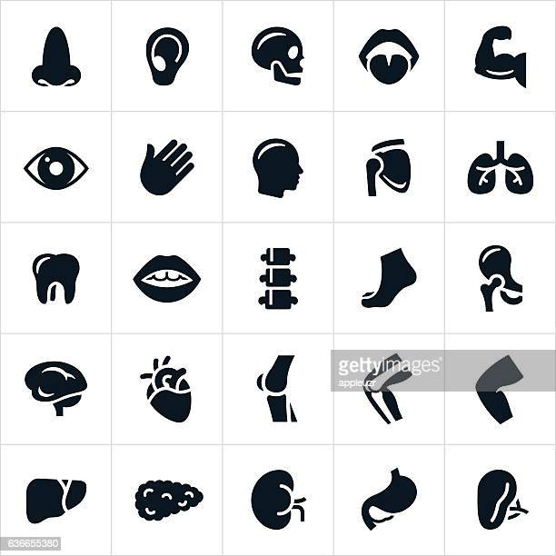 Menschlicher Körper Teile Symbole