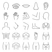 Human body parts linear vector icons. Thin line. Anatomy