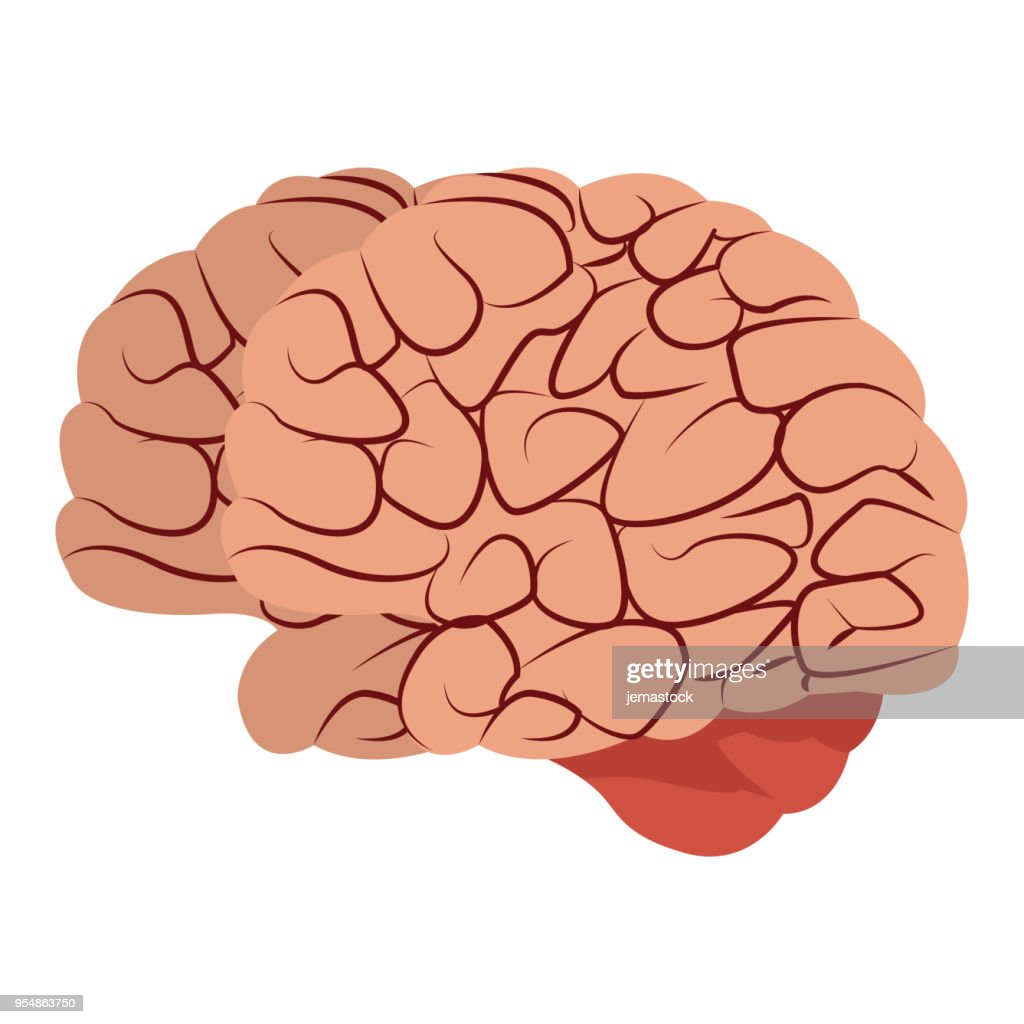 Cartoon Of A Human Brain Diagram Download Wiring Diagrams
