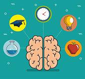 human brain education thinking concept vector illustration graphic design