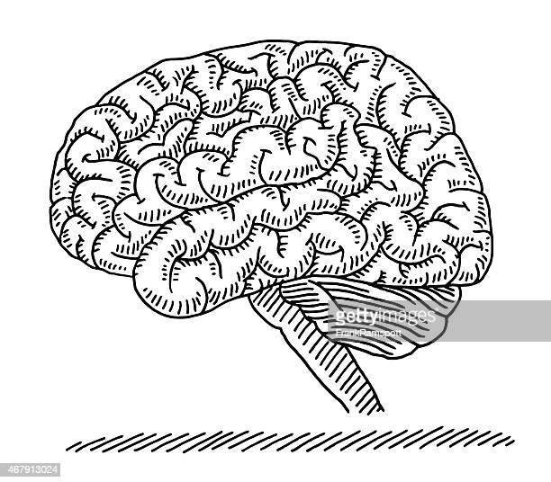 Human Brain Side View Drawing
