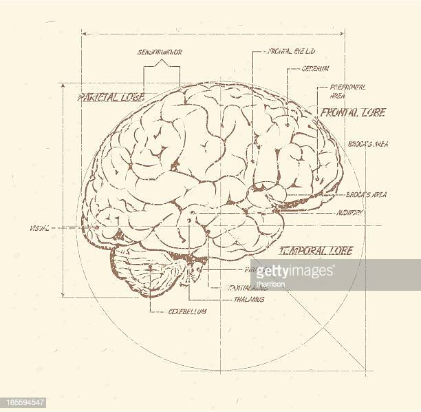Human Brain Weathered