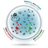 Three molecules inside the human cell: Free radical with missing electron, Normal stable molecule with paired electrons and Antioxidant with extra electrons which can be donated to free radical