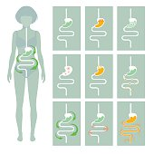 human digestive system, vector illustration of digestion tract disease
