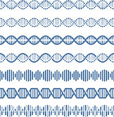 Human genome structural model dna vector seamless pattern brushes. Helix structure dna, research human genome, vector illustration