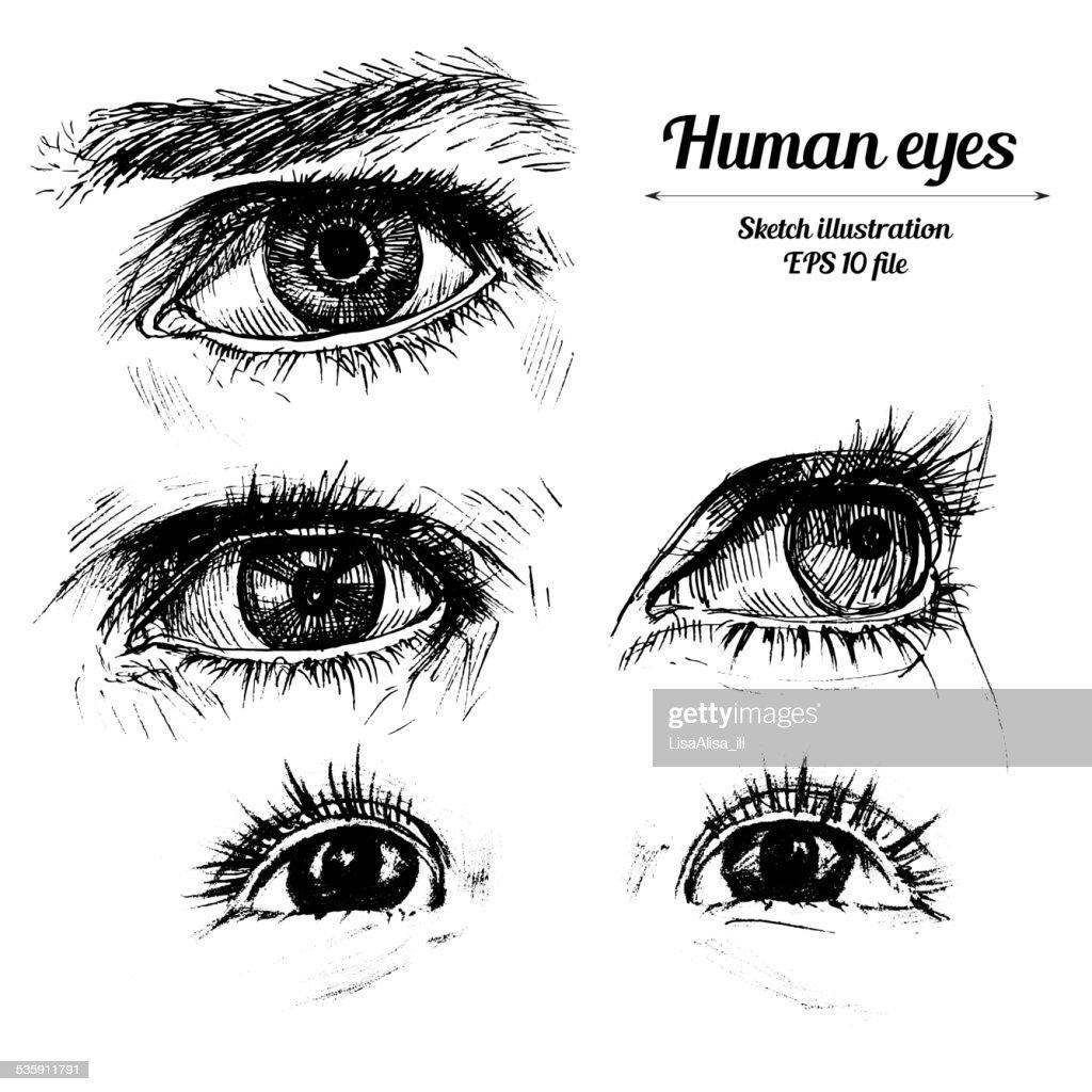 Human hands boceto ilustración : Arte vectorial