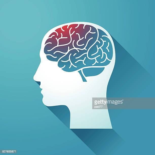 Menschlicher Kopf und Gehirn
