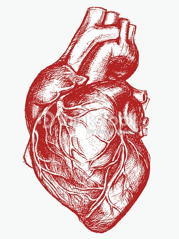 Human Heart Drawing Line Work Vector Art Thinkstock