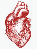 Human Heart Drawing line work Vector for use.