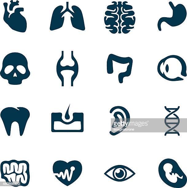 Menschliche Icon Set