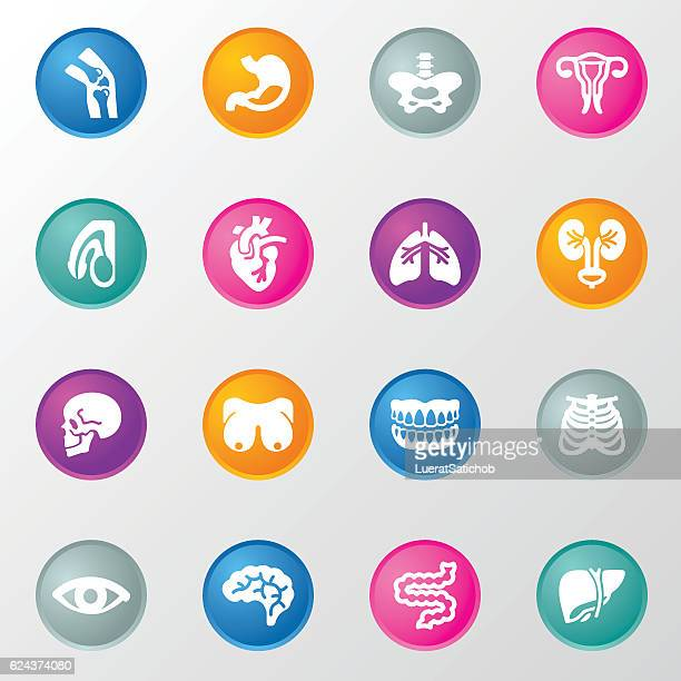 Human Internal Organ Circle Color Icons