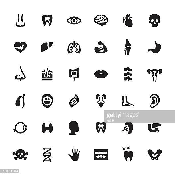 Human Internal Organ vector symbols and icons