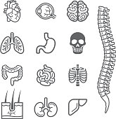 Human internal organs detailed icons set.