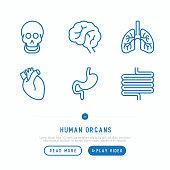 Human internal organs thin line icons set: skull, brain, lungs, heart, stomach, intestines. Vector illustration.