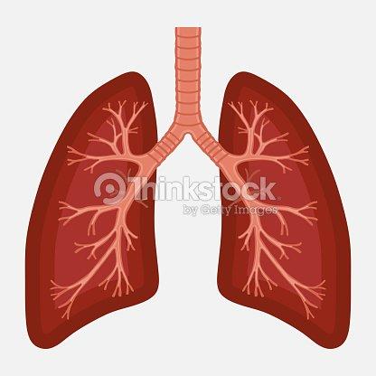 Human lung anatomy diagram illness respiratory cancer arte vetorial human lung anatomy diagram illness respiratory cancer arte vetorial ccuart Choice Image