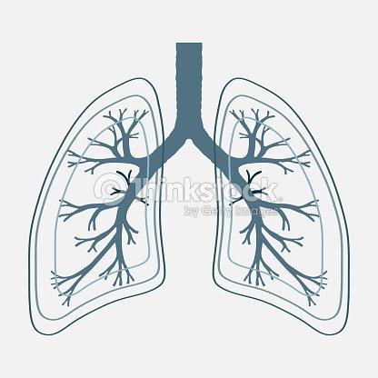 Human lung anatomy illustration illness respiratory cancer gra arte human lung anatomy illustration illness respiratory cancer gra arte vetorial ccuart Choice Image