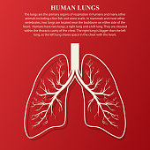 Human Lung anatomy illustration with sample text. Illness respiratory cancer graphics. Vector
