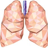 Realistic human lungs in low poly with trachea. Vector EPS 8.