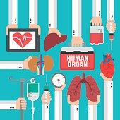 Human organ for transplantation design flat.Vector illustration