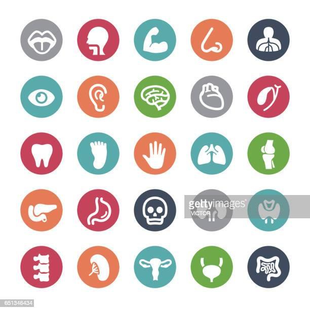 Human Organ Icons - Bijou Series