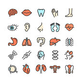 Human Organs Color Thin Line Icon Set Include of Spine, Bone, Nose and Hand. Vector illustration of Organ
