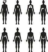 Vector icon set of human organs, each organ in a single body silhouette