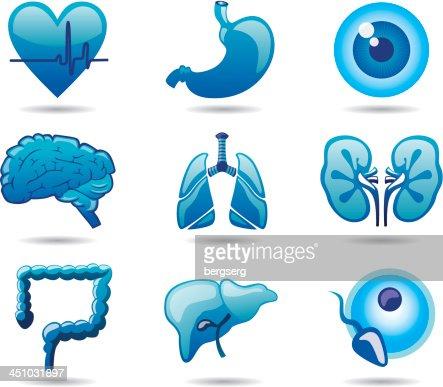 Human Organs Icon set