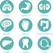 Human organs - vector icons collection.