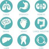 Human organs - vector icons collection.