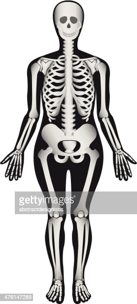 human skeleton female vector art   thinkstock, Skeleton